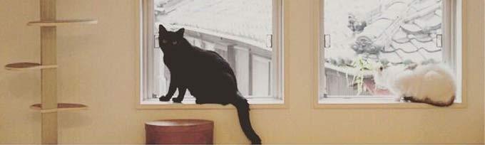 cat-courage-brave12