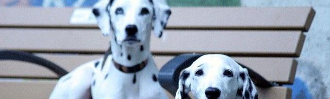 saga-of-dog13
